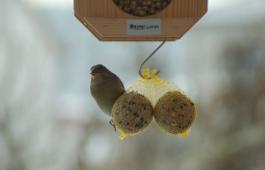 Vogel Futtern Im Winter Winterfutterung Vogelfutter